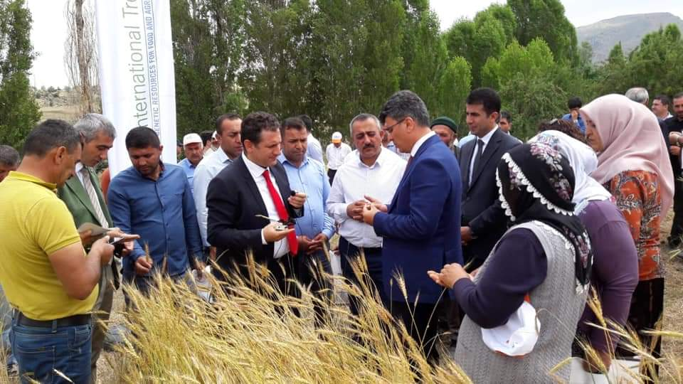LOCAL WHEAT FIELD DAY WAS HELD IN NIĞDE PROVINCE.