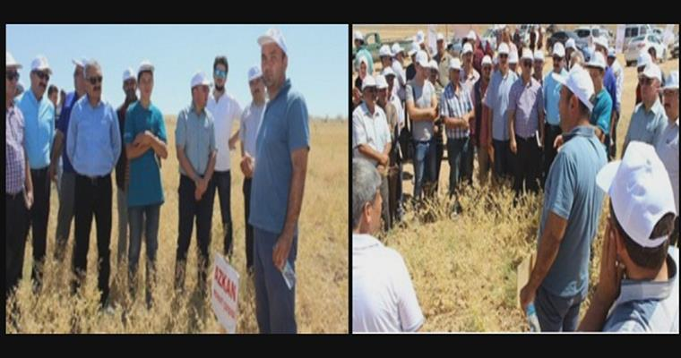 The Field Day in Karaman Province