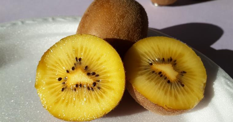 "The first kiwifruit cultivar of our country was registered under the name ""İlkaltın"""