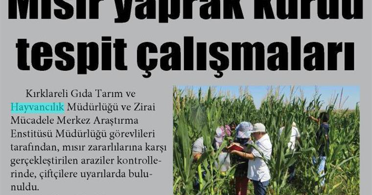 In Edirne and Kırklareli Provinces, Our Experts Made Observations About Maize Armyworm (Mythimna spp.)